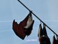 Animals_Bat.JPG