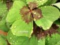 Flowers_green_Klee.JPG
