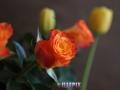 Flowers_orange_Rose.JPG
