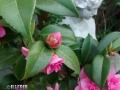 Flowers_pink_1.JPG