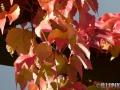 Flowers_red_Wine1.JPG