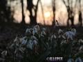 Flowers_white_Maigloeckchen.JPG