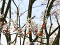 Flowers_white_Tree.JPG