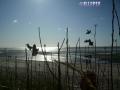 Impressions_Beach3.JPG