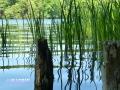 Landscape_Lake.JPG