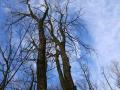 Landscape_Trees1.jpg